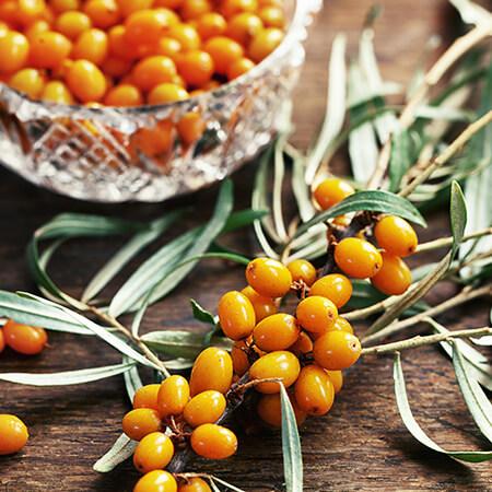 olivello-spinoso